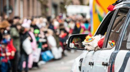 """Dodentol in Sint-Truiden nu al op acht: """"Carnavalsstoet kan verklaring zijn voor hoge Truiense besmettingsgraad"""""""