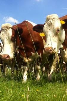 Biologische boer uit Vught wacht nog even met blij zijn