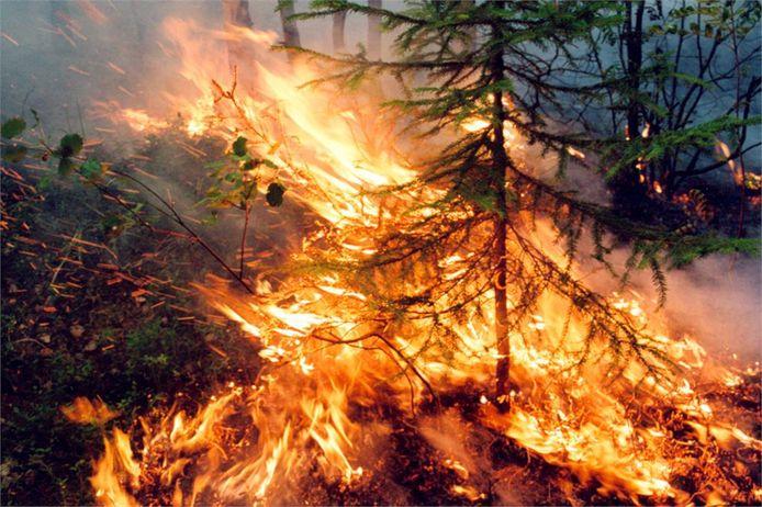 Bosbranden in de regio Krasnoyarsk