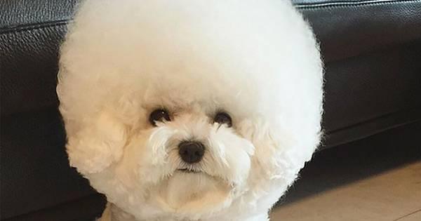 Is Teefje Tori Het Schattigste Hondje Van De Wereld