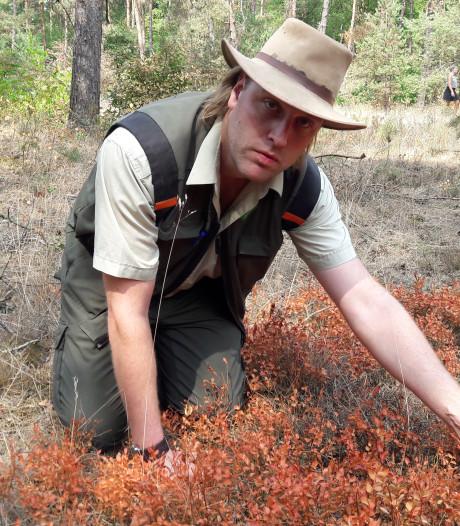 Het bos zucht, steunt en kraakt onder de droogte