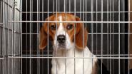 Unilever wil wereldwijd verbod op dierproeven bij cosmeticaproducten