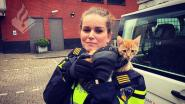Kitten zit anderhalve week piepend aan een touwtje op balkon in Nederland