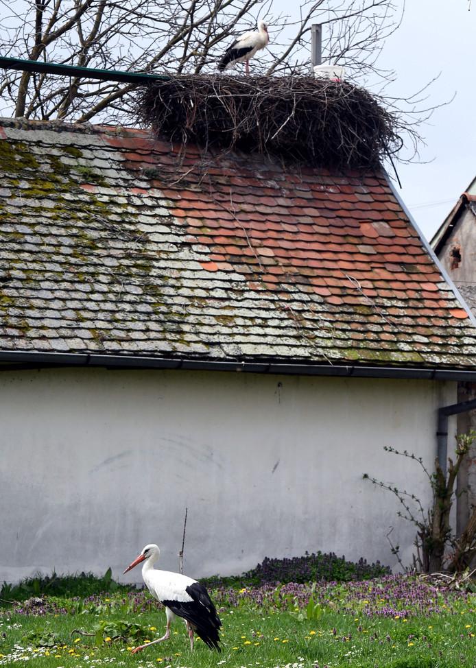 Klepetan kijkt vanop het nest toe hoe Malena een wandelingetje maakt.