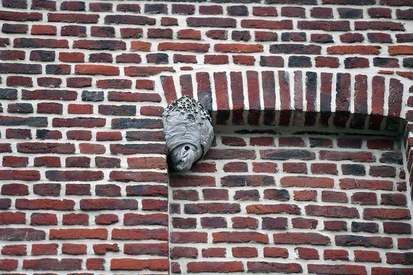 Het wespennest in de Ridderstraat in Leuven. De brandweer zal het op een later tijdstip verwijderen.