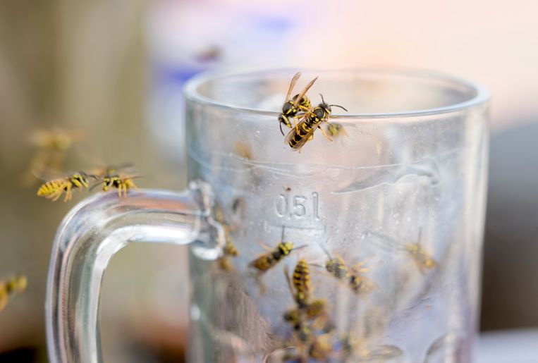 Wasps in glass of beer