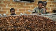 Wereldwinkels steunen arme cacaoboeren met actie Bite to Fight
