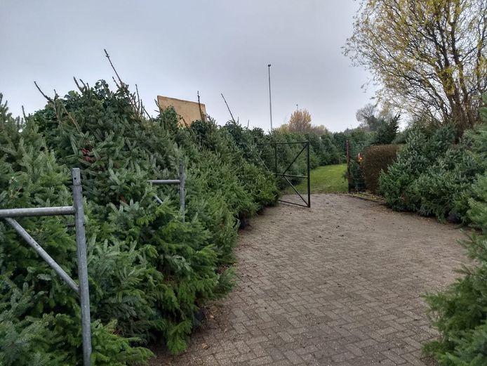 De Kiwanis Club Almelo gaat met vele kerstbomen langs deuren, om geld in te zamelen voor het goede doel.