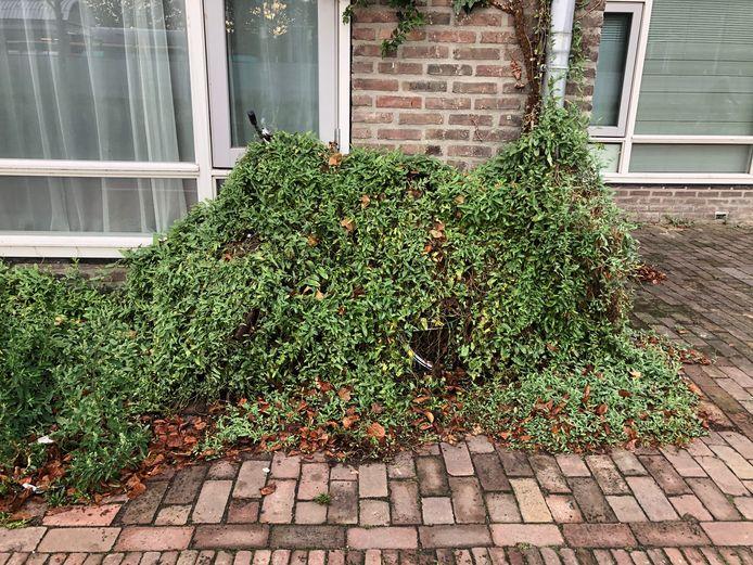 Een struik of een fiets? Aan de Parallelweg in Den Bosch