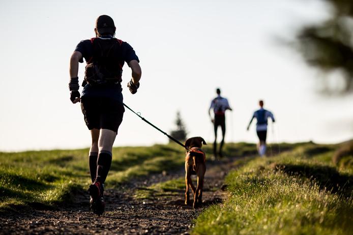 Hardlopen met je hond: een sport in opkomst.