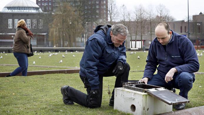Rattenvangers John van Vliet (links) en Peter Muilwijk kijken in een rattenval in de Afrikaanderwijk.