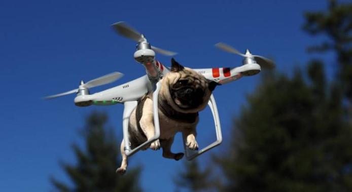 Il fait promener son animal par un drone