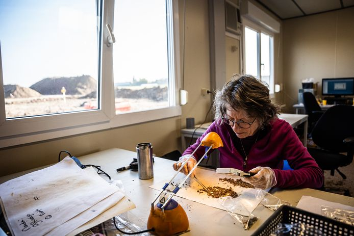 Vrijwilligster Rianet Knevel bezig met het zogehetern splitsen van de archeologische vondsten.