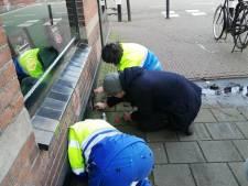 Gewonde kat zit al drie dagen vast in muur van Utrechts café, reddingspogingen lopen uit op niets