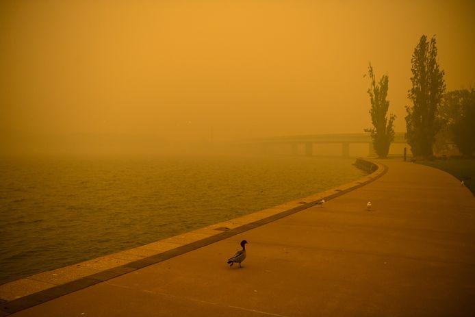 Australië kampt al weken met de hevigste bosbranden in decennia.
