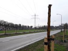 Afgezaagde bomen langs Gewandeweg zijn bewuste actie van gemeente Oss
