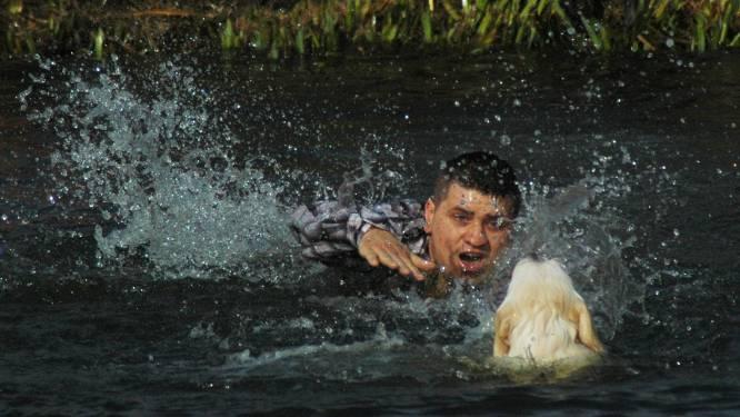 Voorbijgangster redt hondje uit water aan Het Pardoen
