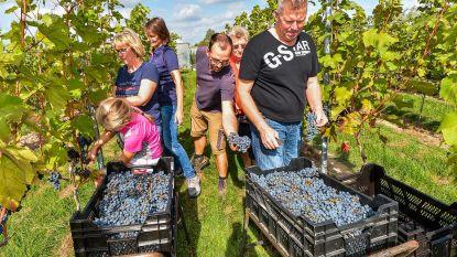 Wandel donderdagavond tussen de wijnranken van Ravenstein