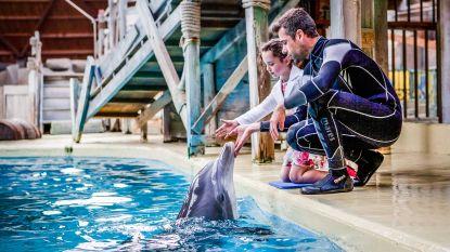 """""""Op foto met een dolfijn voor Valentijn, waarom niet?"""" Kenners zien geen graten in actie van Boudewijn Seapark"""
