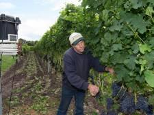 De beste wijngaardenier van de laatste jaren komt uit Winterswijk