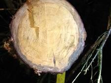 Omgezaagde bomen gedumpt in de Linge