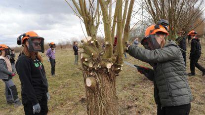 Opleiding knotten van bomen in NEC De Pastorie