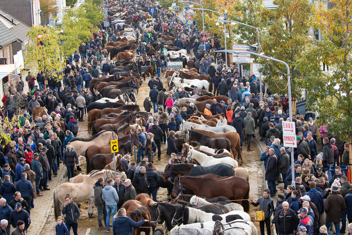 De paardenmarkt in Hedel trok afgelopen maandag weer veel publiek.