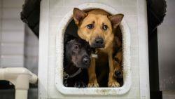 Twee honden in Hongkong door baasjes besmet met coronavirus