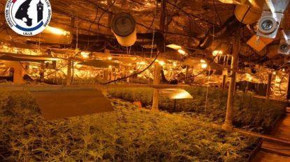 """8.000 cannabisplanten aangetroffen in Roubaix: """"Recordvangst voor Frankrijk"""""""