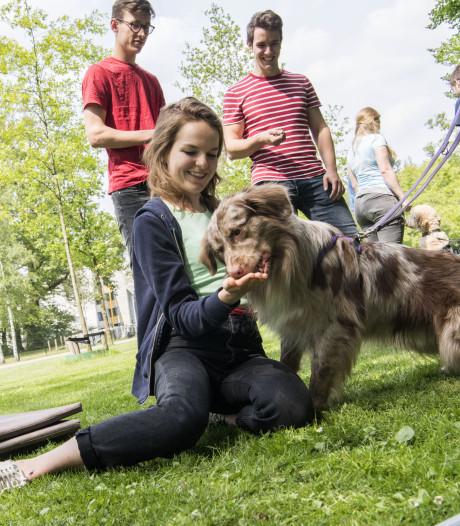 Knuffelen met honden op de UT om de stress te verminderen