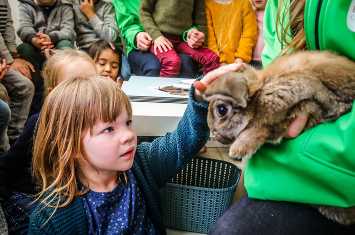 Brugge konijn in de klas in olva sparrenhof