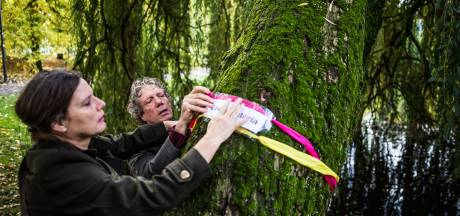 Werkgroep Behoud Bomen Arnhem koestert treurwilg als 'Laura Victoria'