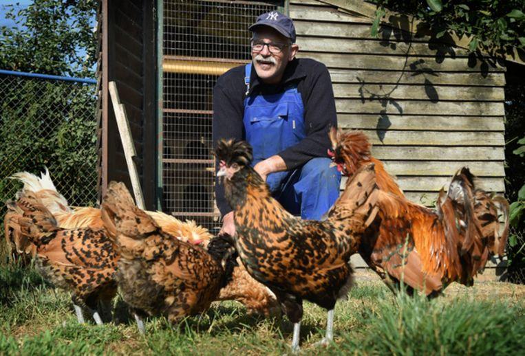Kippenboer Geert van der Kaa: 'Het houden van de Chaamse Hoen kan niet meer uit.' Beeld Marcel van den Bergh