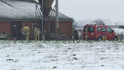 Brandweer in de weer met redden van vier varkens in aalput, één dier al overleden