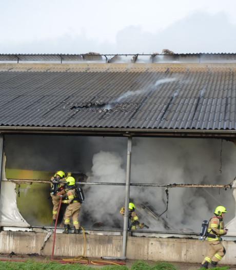 Brand in stal vol koeien in Lunteren onder controle: dieren gered