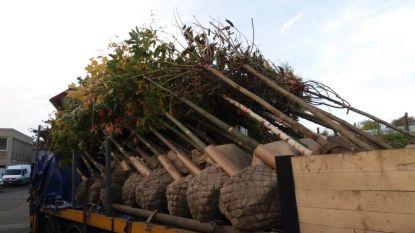 Aanplanting van nieuwe bomen langs wegen