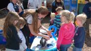 Walvissen in De Haan krijgen bezoek van SOS Dolfijn