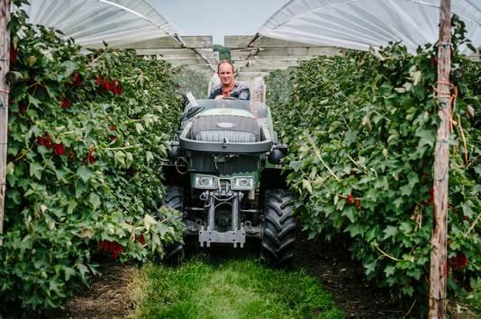 Fruitteler van Garderen uit Schalkwijk gebruikt uitsluitend biologische bestrijdingsmiddelen in zijn bedrijf