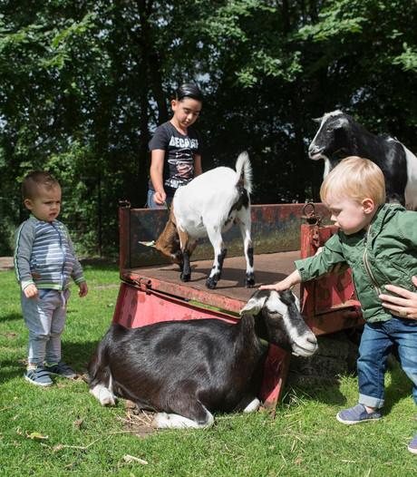 PvdD: dieren kinderboerderij niet meer naar slachthuis