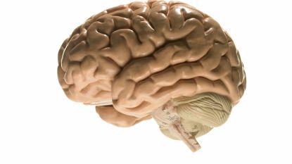 Startup wil je brein opslaan voor later, maar moet je daarvoor wel doden