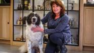 Hond Laika met heupproblemen is gered: ruim 12.000 euro opgehaald na oproep