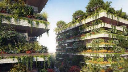 Afrika krijgt allereerste 'verticaal bos' in Caïro: bewoners zullen tussen 350 bomen en 14.000 struiken leven