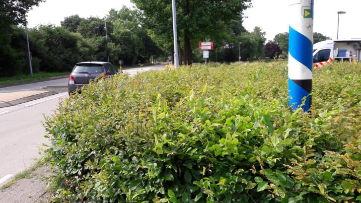 Beukenhaag staat tussen automobilist en fietser in: zondag ging het écht mis in Moergestel