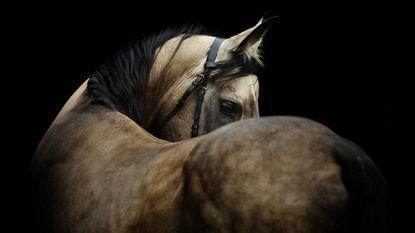 10.000 euro voor gouden tip over paardenbeul
