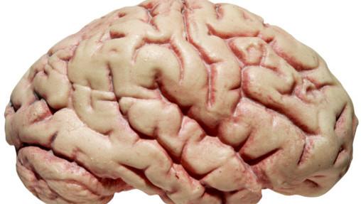 Hersenverbindingen Houden Het Geheugen Scherp Gezond Adnl