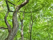 Geldrop-Mierlo zet alle groen op één kaart