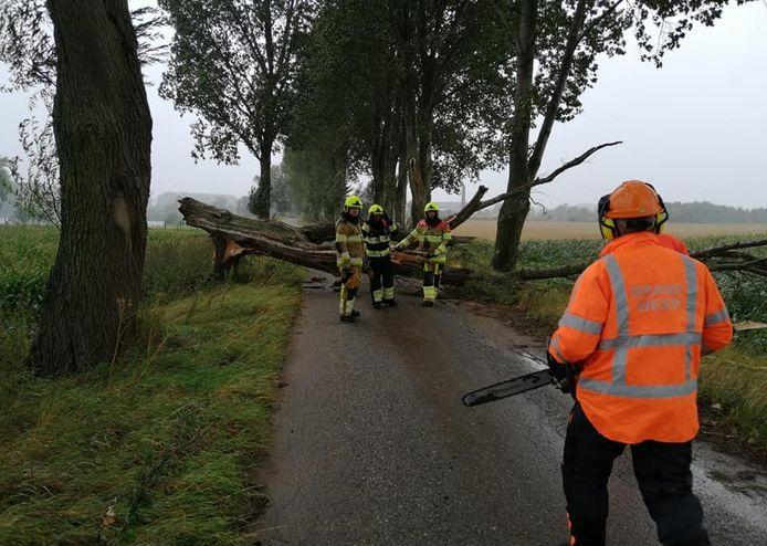 De brandweer moest in Rijswijk uitrukken voor een omgevallen boom.
