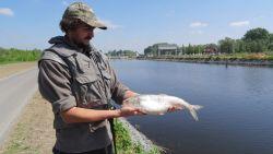 Ook goed nieuws na vervuiling: vis die 100 jaar 'vermist' was opnieuw aangetroffen in de Schelde