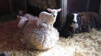 Kinderboerderij Rivierenhof ontwaakt na winterslaap