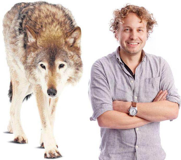 Al slacht een wolf tientallen schapen af, dan is dat nooit zijn schuld, las columnist Niels Herijgens.